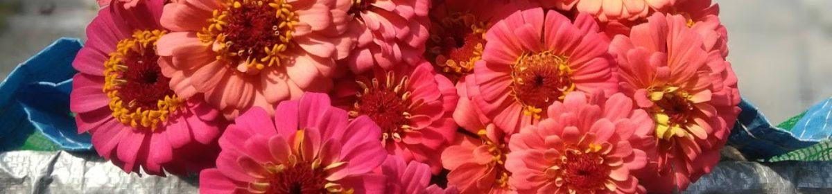 Suki Flower Farm Web